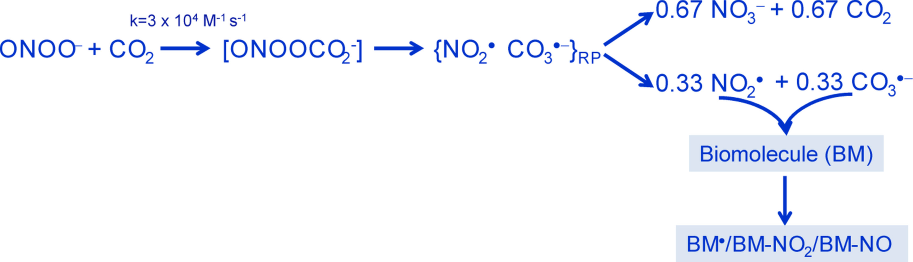 Schematic reaction of peroxynitrite and carbon dioxide